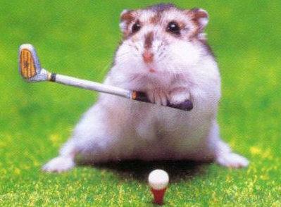hamster_golf.jpg