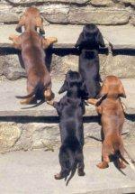 Pets_1597008033502.jpg