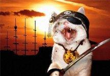 Pirate-Cat.jpg